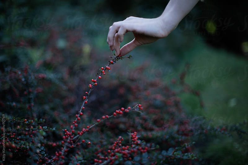 Picking berries by Kitty Gallannaugh for Stocksy United