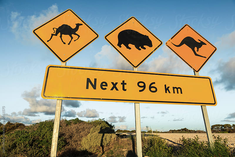 Camel, wombat and kangaroo warning sign. Nullarbor Plain. South Australia. by John White for Stocksy United