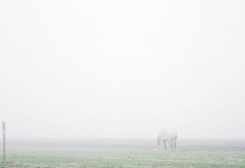 Gray horse in a misty meadow.  by Marcel for Stocksy United