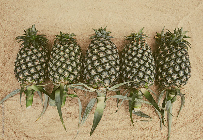 Pineapples Lined Up in the Sand by Mosuno for Stocksy United