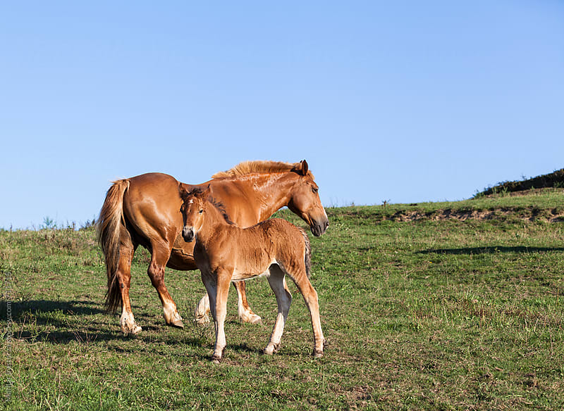 Foal standing beside his mother by Marilar Irastorza for Stocksy United