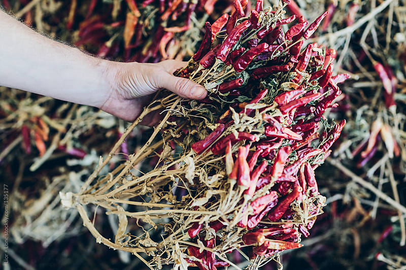 Hand holding a bunch of organic red dry chilies by Lior + Lone for Stocksy United