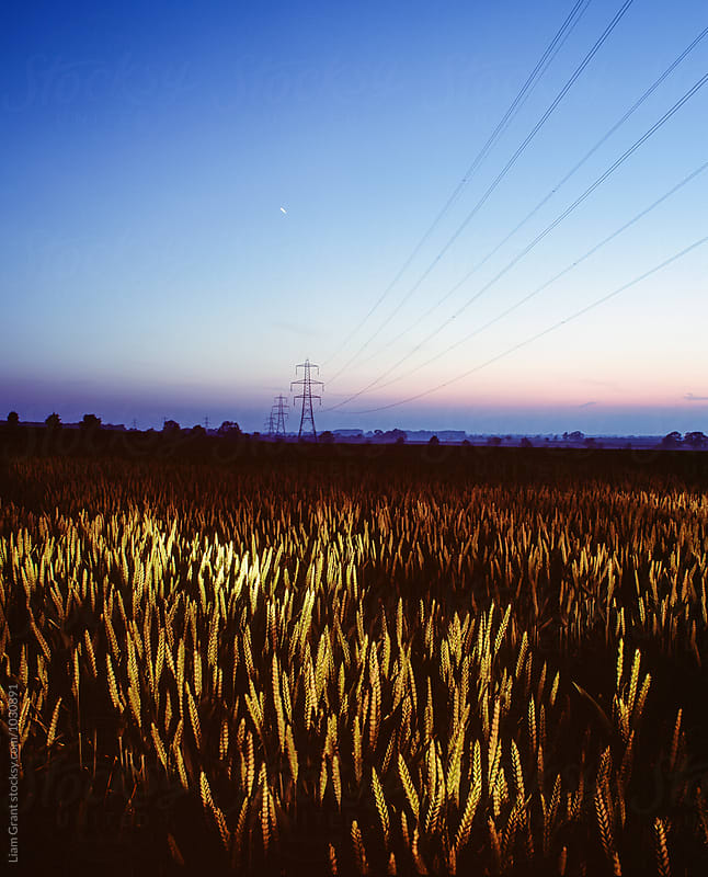 Wheat field and electricity pylon lit by torch light at twilight. Norfolk, UK. by Liam Grant for Stocksy United