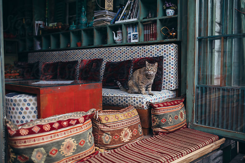 Cat sitting in a beautiful oriental interior by Maja Topcagic for Stocksy United