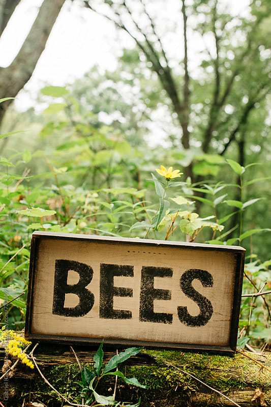 Bees sign on a tree log by Gabriel (Gabi) Bucataru for Stocksy United