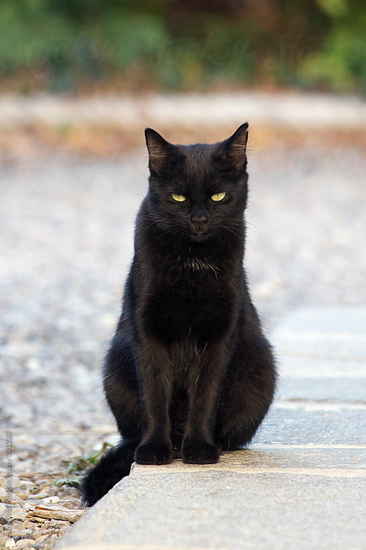 Beautiful black cat sits in bright garden and looks at the camera with serious eye by Laura Stolfi for Stocksy United