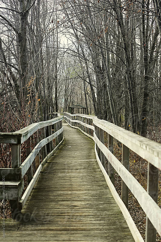 Boardwalk leading into a wooden marshland by Sandra Cunningham for Stocksy United