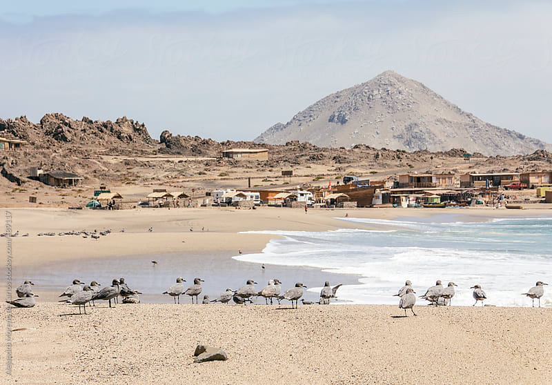 Small village on the coast with birds. Desertic landscape by Alejandro Moreno de Carlos for Stocksy United
