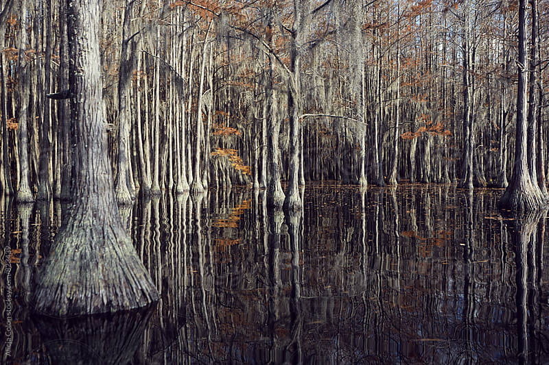 Cypress tree pond by Alicja Colon for Stocksy United