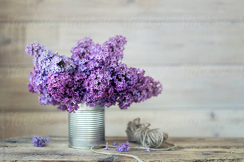 Lilacs in an empty tin can by Ruth Black for Stocksy United