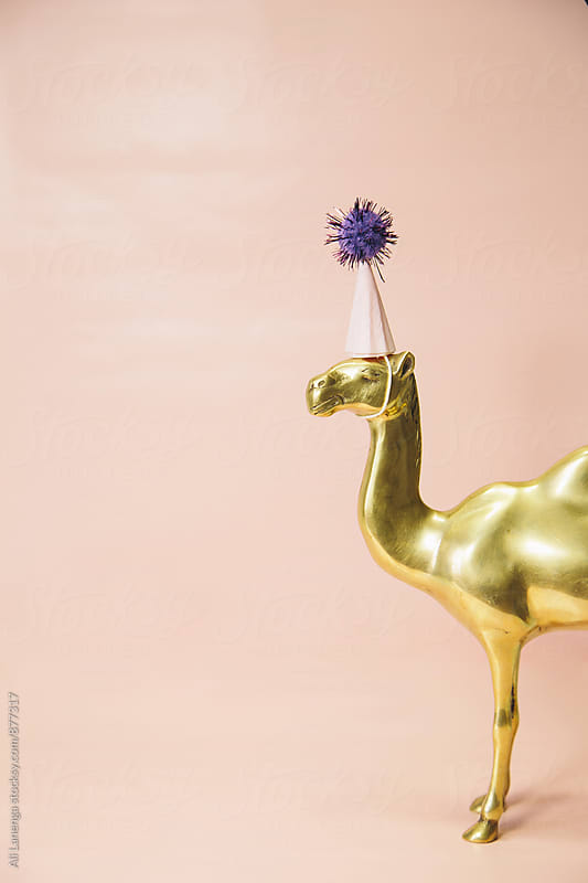 Party Animal by Ali Lanenga for Stocksy United