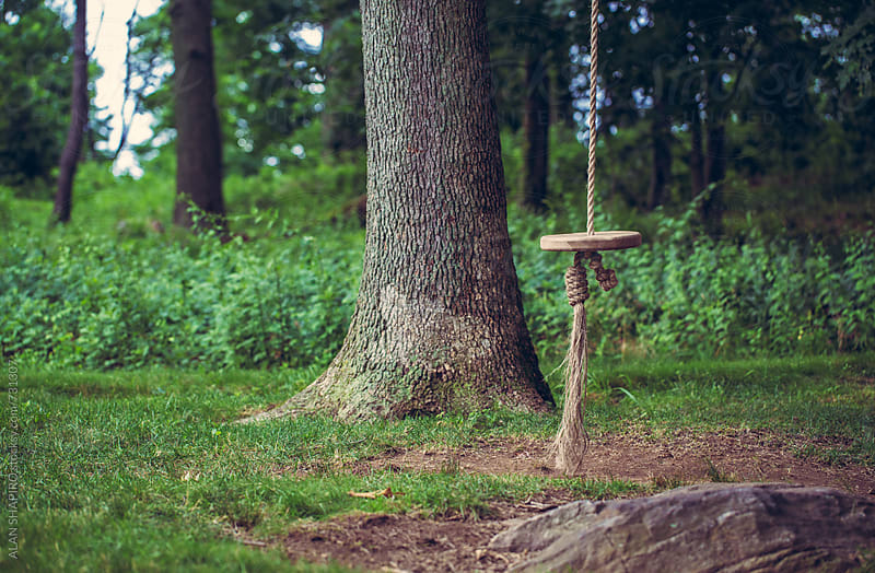 Tree swing by alan shapiro for Stocksy United