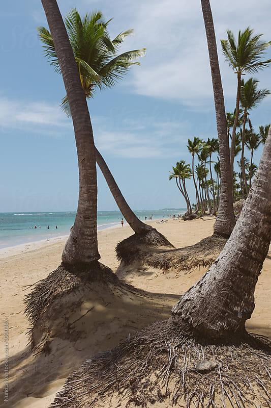 Punta Cana, Dominican Republic by Nuno Silva for Stocksy United