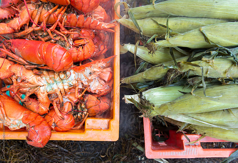 Lobster and corn on the cob fresh off the fire at a traditional Maine lobster bake by Cara Dolan for Stocksy United