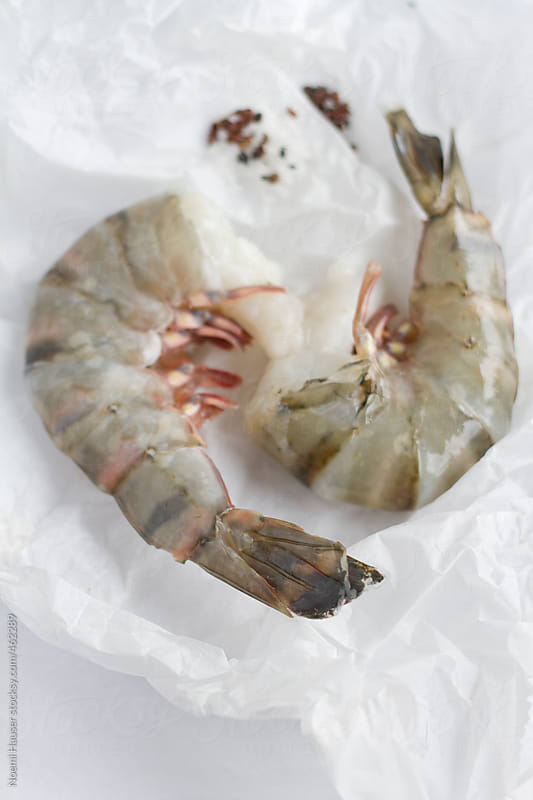 Prawn by Noemi Hauser for Stocksy United