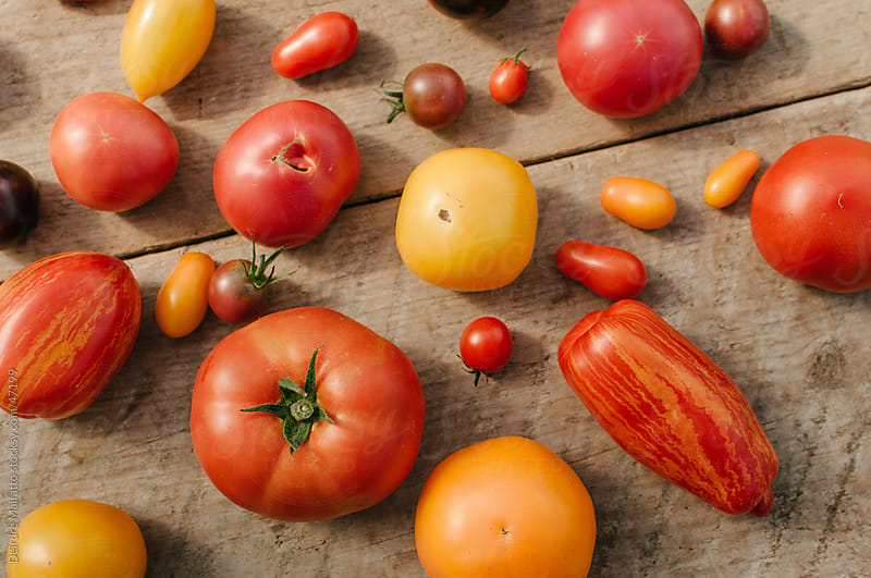 Variety of different breeds of tomatoes scattered on table. by Deirdre Malfatto for Stocksy United