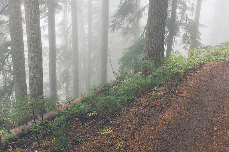 Hiking trail through foggy old growth forest by Paul Edmondson for Stocksy United