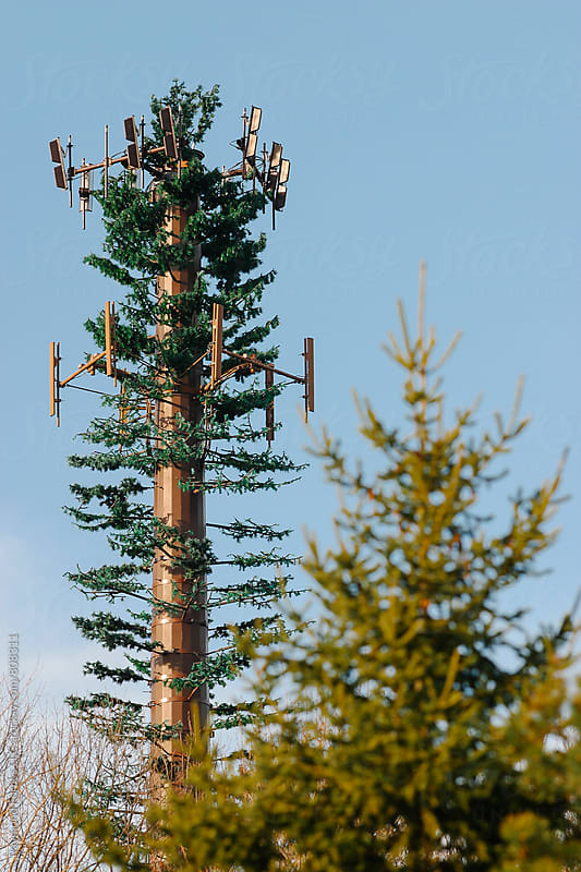 Camouflage Cell Phone Tower by Raymond Forbes LLC for Stocksy United