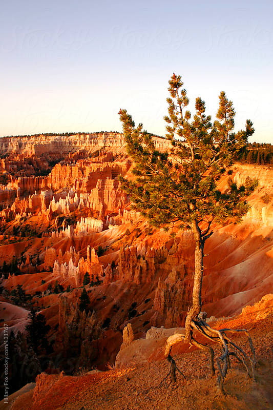 Bryce Canyon by Hillary Fox for Stocksy United