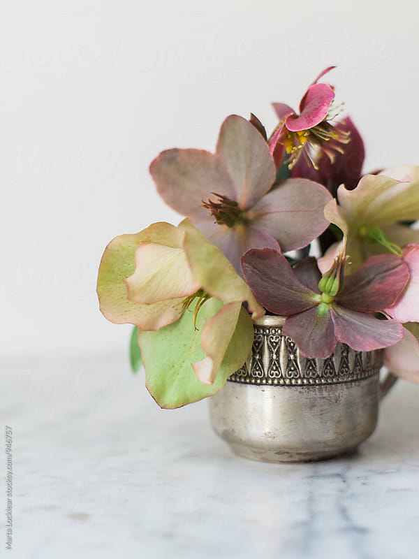 Hellebores in a tiny silver cup by Marta Locklear for Stocksy United