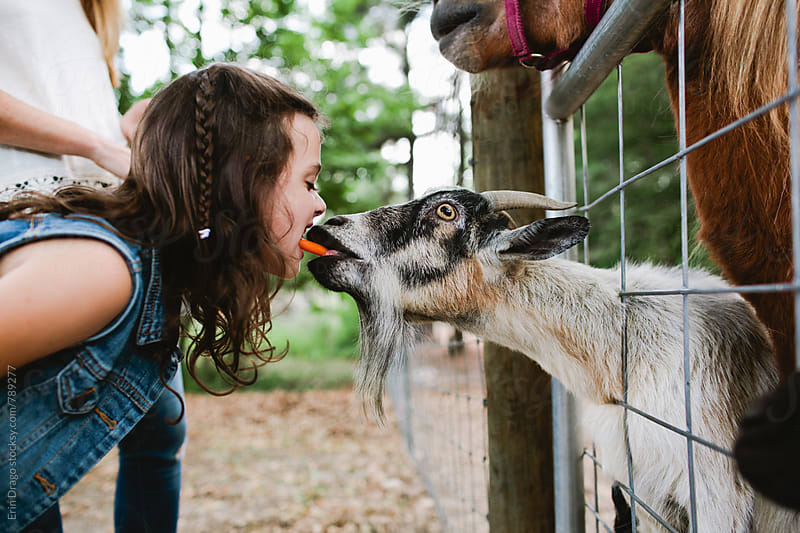 Little girl feeding a goat with her mouth by Erin Drago for Stocksy United