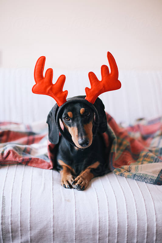 Small black wearing a reindeer horns looking at camera by Marija Mandic for Stocksy United
