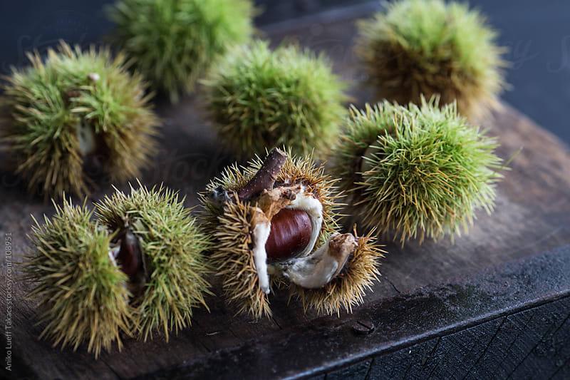 Fresh chestnut in green shell by Aniko Lueff Takacs for Stocksy United