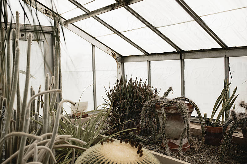 cactus and succulent garden in greenhouse by Nicole Mason for Stocksy United