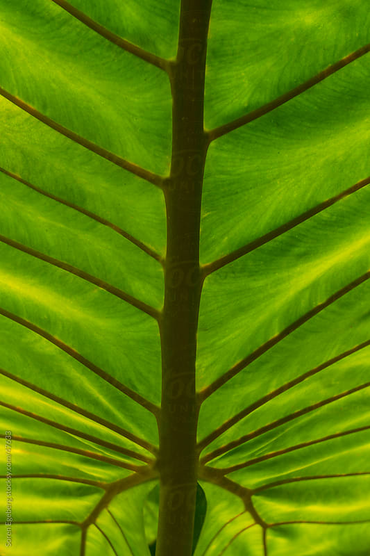 Closeup of bright green leaf from a palm tree by Soren Egeberg for Stocksy United