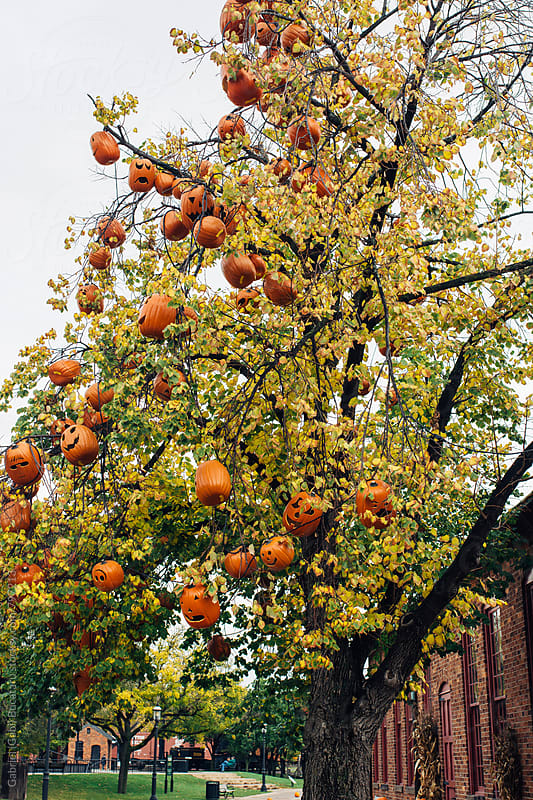Pumpkin decorated tree by Gabriel (Gabi) Bucataru for Stocksy United