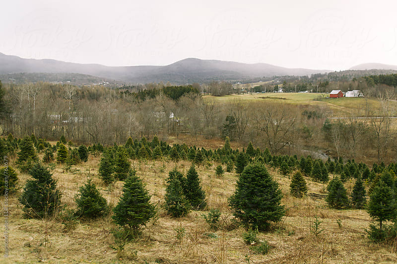 Christmas Tree Farm Vermont by Raymond Forbes LLC for Stocksy United