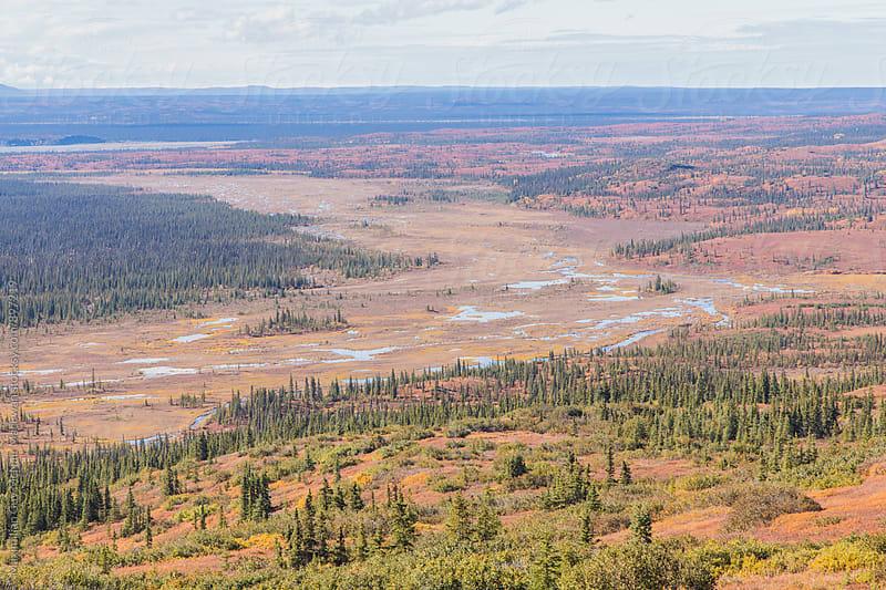The stunning landscape of Denali national park by Maximilian Guy McNair MacEwan for Stocksy United