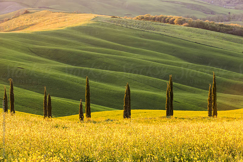 Tuscany landscape at sunset light by Marilar Irastorza for Stocksy United