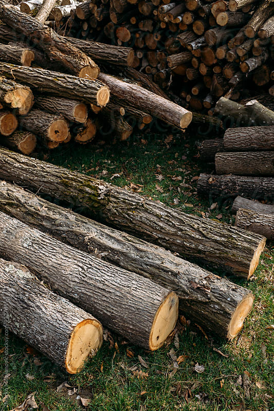 Firewood prepared for piling for winter by Marko Milovanović for Stocksy United