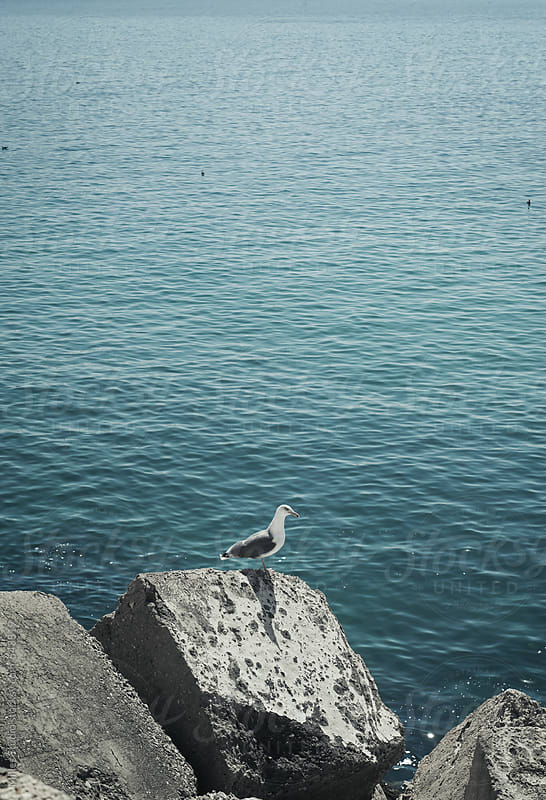 Seagull near sea by Milles Studio for Stocksy United