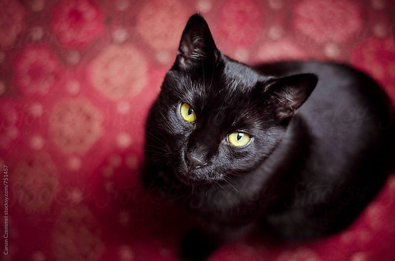 black cat by Canan Czemmel for Stocksy United