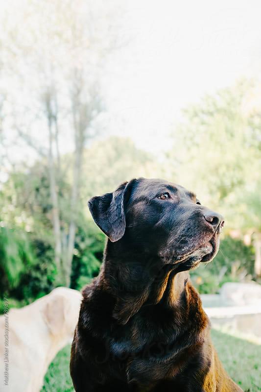 Regal Dog by Matthew Linker for Stocksy United