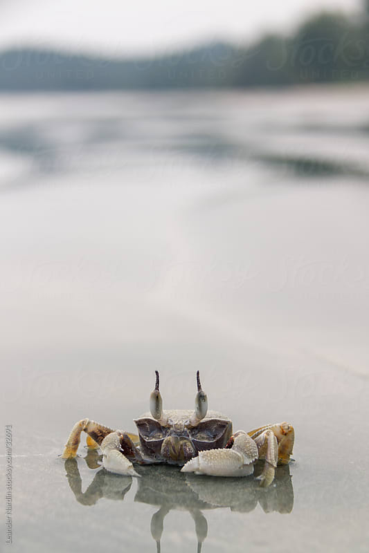 Crab on the beach by Leander Nardin for Stocksy United