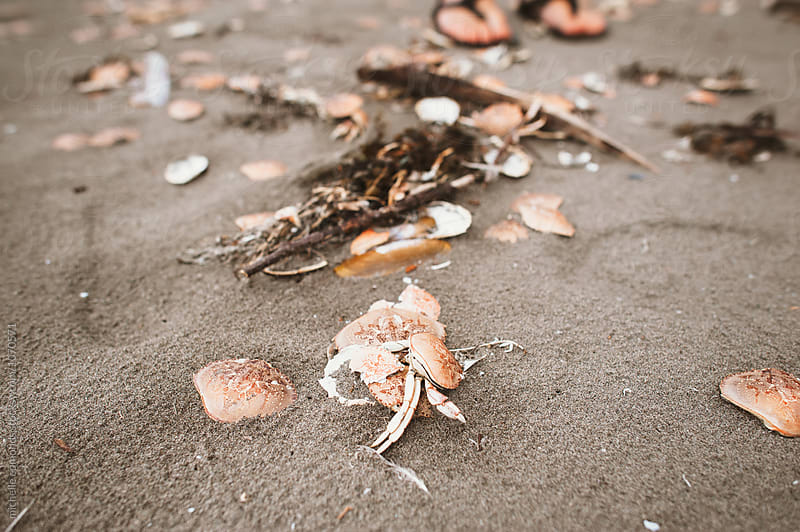 Dead Crab on a Beach in Washington by michelle edmonds for Stocksy United