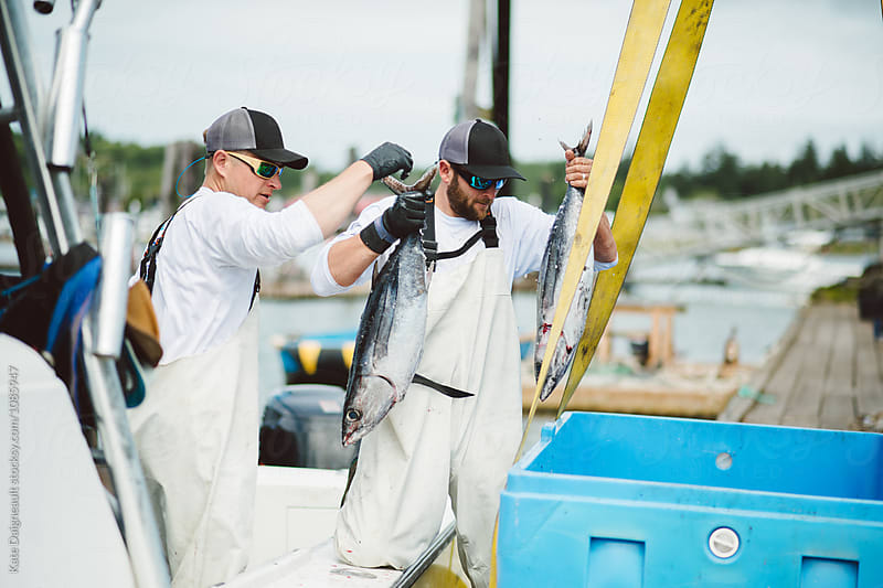 Commercial tuna fishermen unloading their boat after a good day on the water by Kate Daigneault for Stocksy United