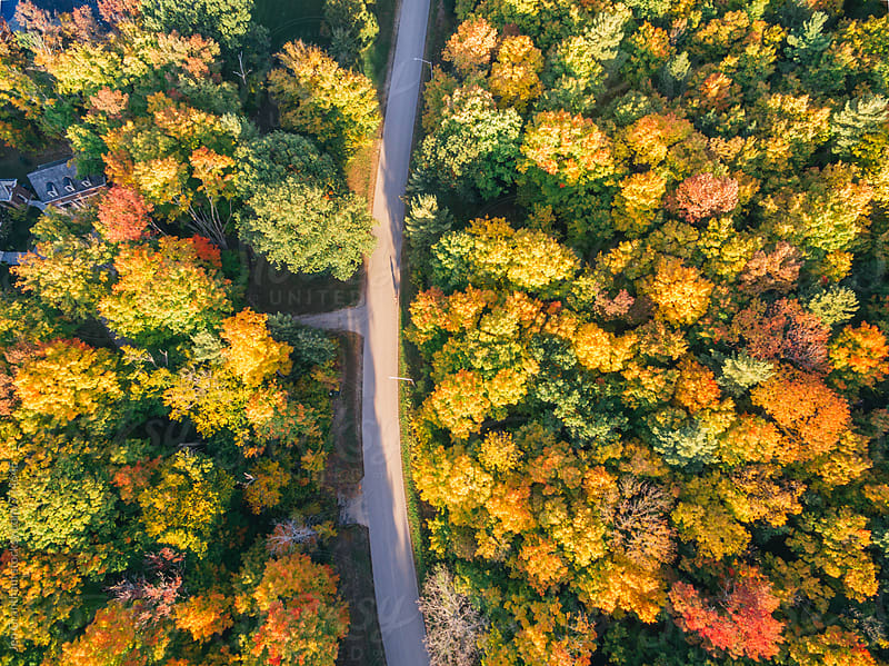 Drone image of changing trees by Jen Grantham for Stocksy United