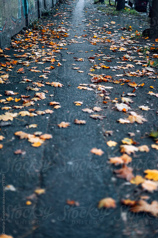 Fallen orange leaves on the path in the park by Dimitrije Tanaskovic for Stocksy United