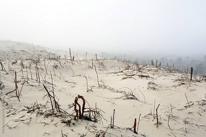 Dunes after a fire by Marcel for Stocksy United