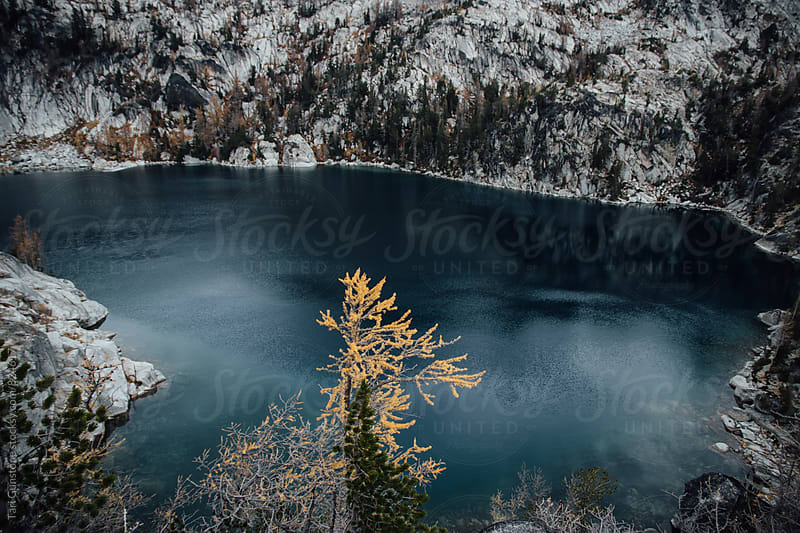 Orange larch tree against background of blue alpine lake by Tari Gunstone for Stocksy United
