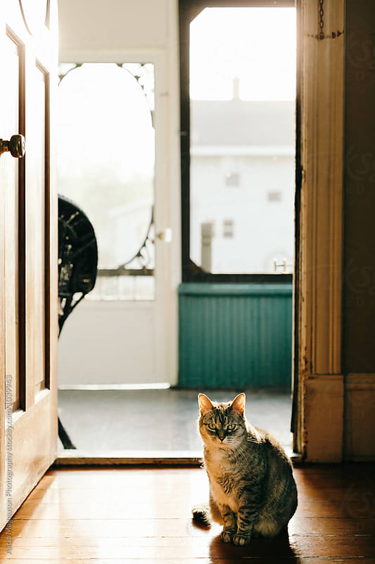 Cat Sitting in Sun by Alicia Magnuson Photography for Stocksy United
