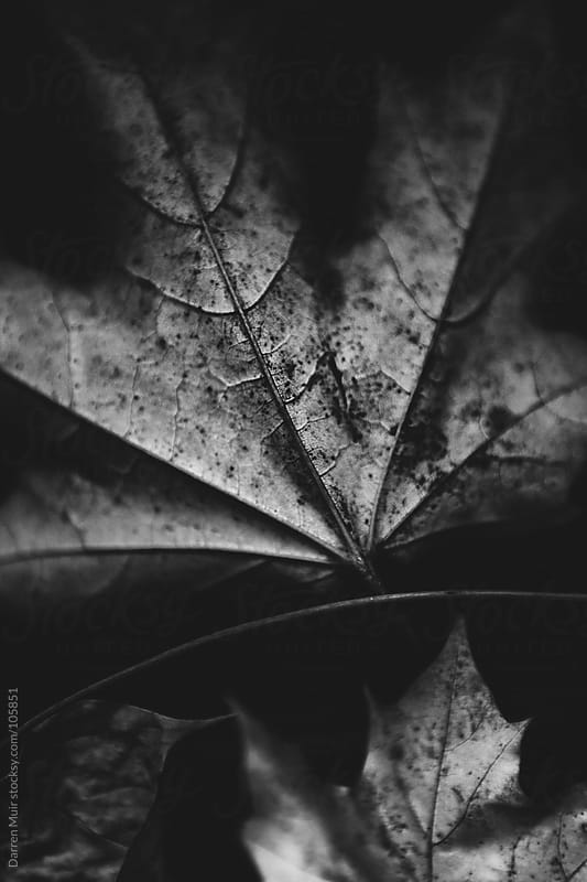 Autumn leaf.  by Darren Muir for Stocksy United