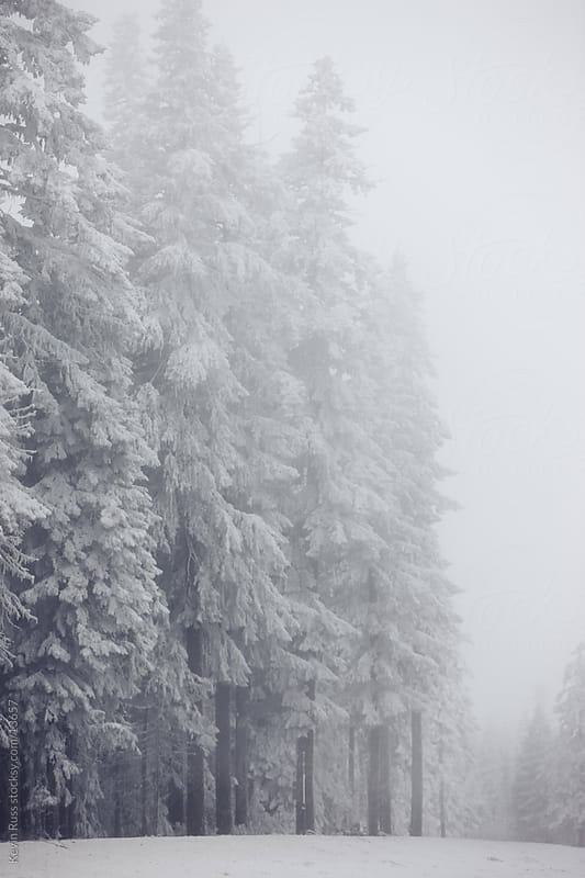 Winter Snow Covered Trees by Kevin Russ for Stocksy United