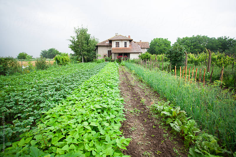 House and a garden in a serbian village. by Mosuno for Stocksy United