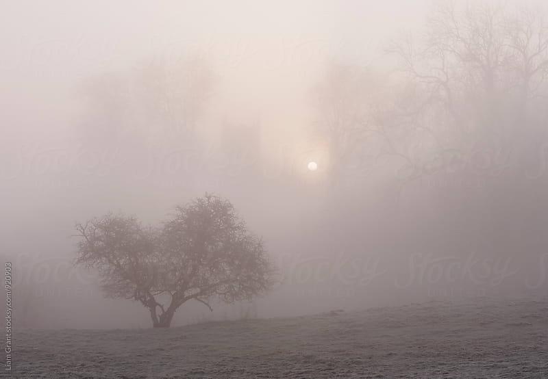 Sunrise through fog behind Hilborough Church. Norfolk, UK. by Liam Grant for Stocksy United
