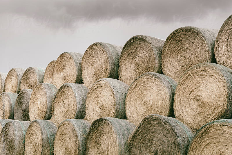 Hay Bales on Farm  in Rural South Dakota by Raymond Forbes LLC for Stocksy United